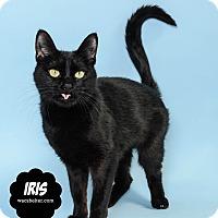 Adopt A Pet :: Iris(@Petsmart Canton) - Wyandotte, MI
