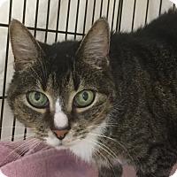 Adopt A Pet :: Zella - Norwalk, CT
