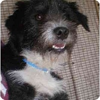 Terrier (Unknown Type, Medium) Mix Dog for adoption in Templeton, California - Dynomite