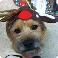 Adopt A Pet :: SEYMORE - Shirley, NY