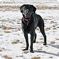 Adopt A Pet :: Tidus - Cheyenne, WY