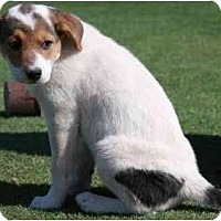 Adopt A Pet :: Valentina - Gilbert, AZ