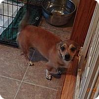 Adopt A Pet :: Honey - Minneapolis, MN