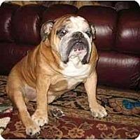 Adopt A Pet :: Harley*adoption pending* - Gilbert, AZ