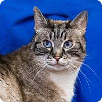 Adopt A Pet :: Cotton - Calgary, AB