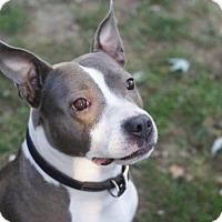 Adopt A Pet :: GRETA - Amherst, OH
