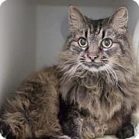 Adopt A Pet :: Ruby - Merrifield, VA