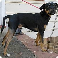 Adopt A Pet :: Pete - Lawrenceville, GA