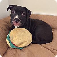Adopt A Pet :: Korver - Avon, OH