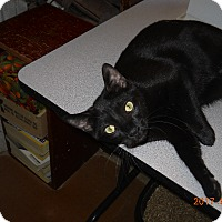 Adopt A Pet :: Cameo - Chandler, AZ