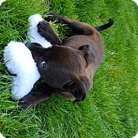 Adopt A Pet :: Shasta - Huntsville, AL