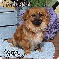Adopt A Pet :: Flannigan - Valparaiso, IN