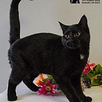 Adopt A Pet :: MENACE - Sandusky, OH
