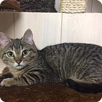 Adopt A Pet :: .Rudy - Ellicott City, MD