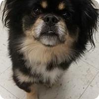 Adopt A Pet :: Odis - Inver Grove, MN