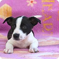 Adopt A Pet :: Dee - Los Angeles, CA