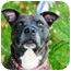 Photo 1 - American Pit Bull Terrier Mix Dog for adoption in Hillsborough, New Jersey - Hogan