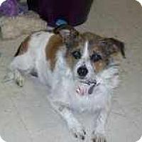 Adopt A Pet :: Jill in Houston - Houston, TX
