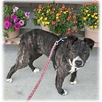 Adopt A Pet :: Smokey - courtesy post - Cincinnati, OH