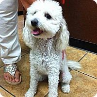 Adopt A Pet :: Sammy - Encinitas, CA