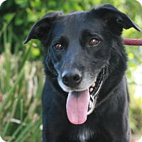 Adopt A Pet :: Luke - Canoga Park, CA