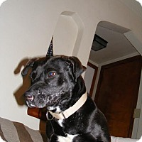 Adopt A Pet :: Mamma Belle - Baden, PA
