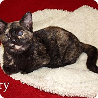 Adopt A Pet :: Tory - Jackson, MS