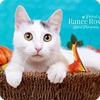 Adopt A Pet :: Annie - Sterling Heights, MI