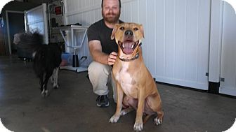 American Pit Bull Terrier Dog for adoption in Salem, Oregon - Yogi