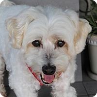 Adopt A Pet :: Cassidy - La Costa, CA