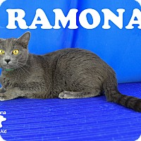 Adopt A Pet :: Ramona - Carencro, LA