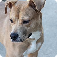 Adopt A Pet :: Dancer - Greensboro, NC