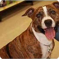 Adopt A Pet :: Mover - Gilbert, AZ