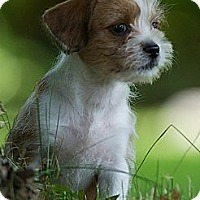 Adopt A Pet :: Didi - Providence, RI