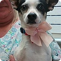 Adopt A Pet :: Mookie - Encinitas, CA