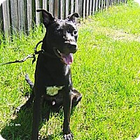 Adopt A Pet :: Abe - Jacksonville, FL