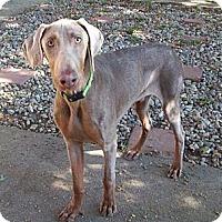 Adopt A Pet :: Harold--pending - New Richmond, OH