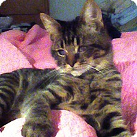 Adopt A Pet :: Lucky - Kirkwood, DE