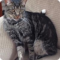 Adopt A Pet :: Kitty Jo - Long Beach, NY