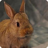 Adopt A Pet :: Tina - Montclair, CA