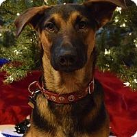 Adopt A Pet :: Ferguson - Pitt Meadows, BC