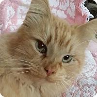 Adopt A Pet :: Ray - Brighton, MO
