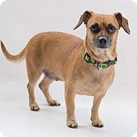 Adopt A Pet :: Sunflora - Atlanta, GA