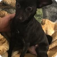 Adopt A Pet :: Xena - Avon, NY