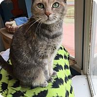 Adopt A Pet :: Grace - LaGrange, KY