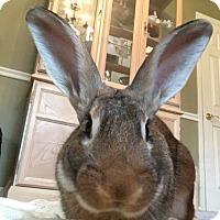 Adopt A Pet :: Elliot - Holbrook, NY