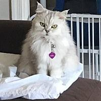 Adopt A Pet :: Mirabella - Alexandria, VA