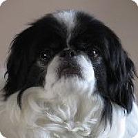 Adopt A Pet :: Teddy - Aurora, CO