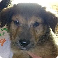 Adopt A Pet :: Oscar - Long Beach, CA