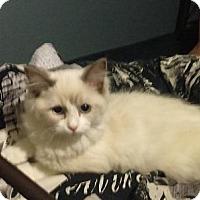 Adopt A Pet :: Alesha - Edmonton, AB
